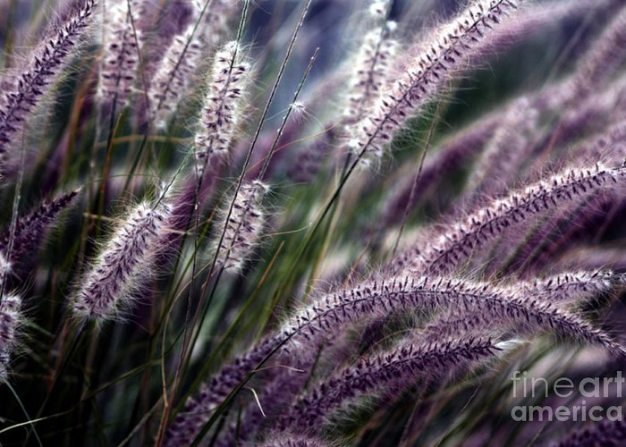 Ornamental Grass Greeting Card featuring the photograph Purple Ornamental Fall Grass by Marjorie Imbeau