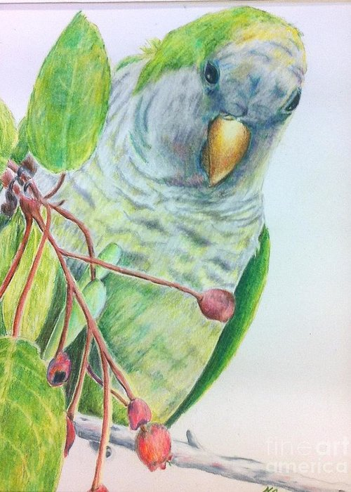 Nature Greeting Card featuring the painting Quaker by Norma Gafford