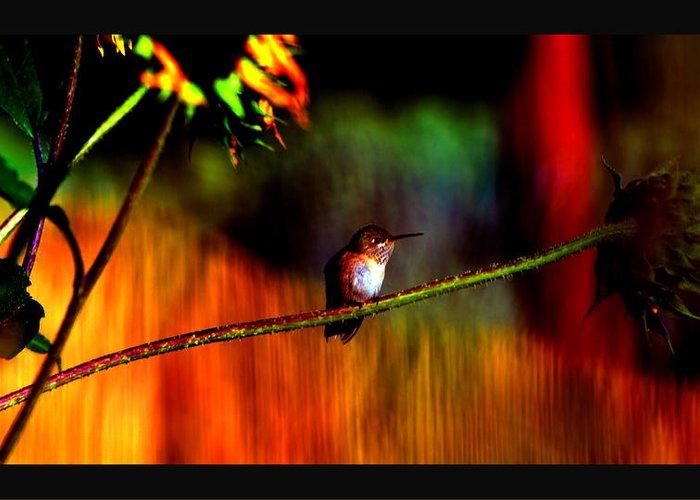 Hummingbird Greeting Card featuring the photograph Rainbow Gardens by Susanne Still