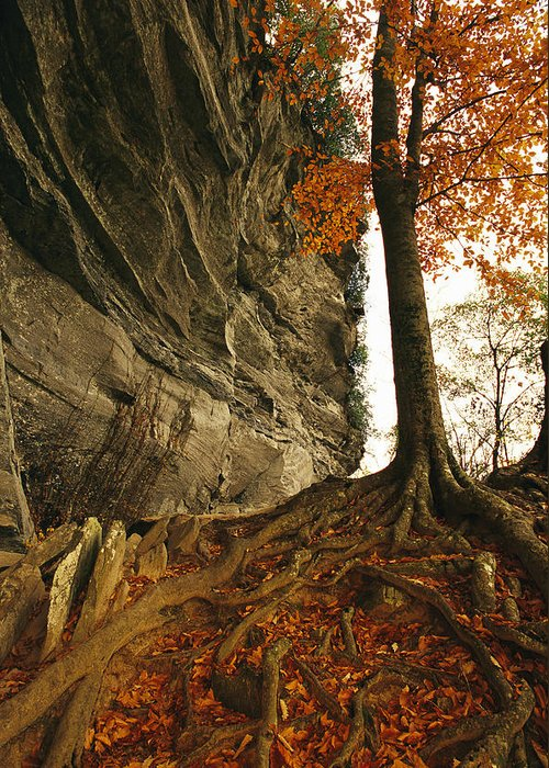 North America Greeting Card featuring the photograph Raven Rock And Autumn Colored Beech by Raymond Gehman