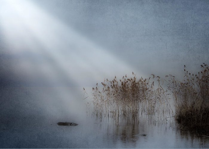 Reeds Greeting Card featuring the photograph Rays Of Light by Joana Kruse