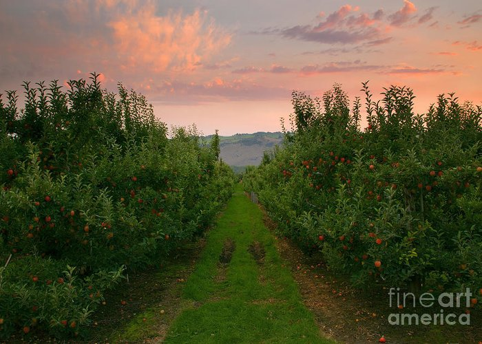Apple Greeting Card featuring the photograph Red Apple Sunset by Mike Dawson
