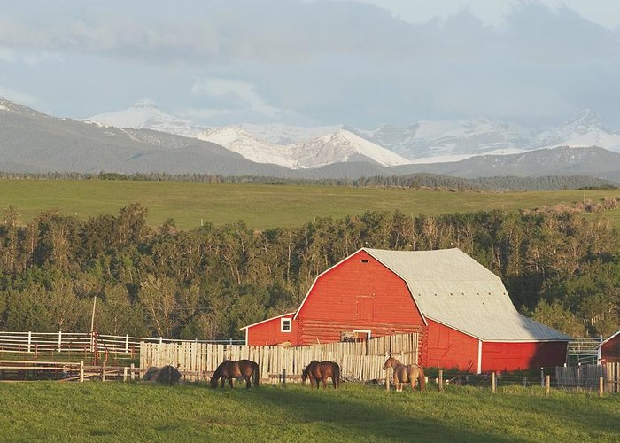 Animal Greeting Card featuring the photograph Red Barn With Horses Grazing by Michael Interisano