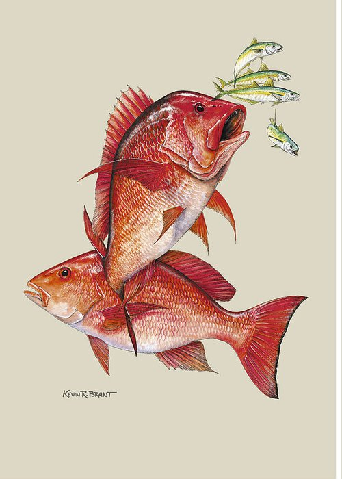 Snapper Greeting Card featuring the painting Red Snapper by Kevin Brant
