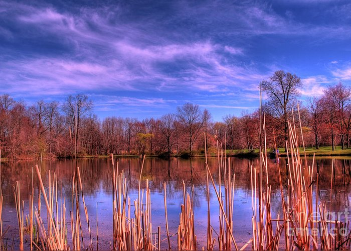 Reeds Greeting Card featuring the photograph Reeds by Paul Ward