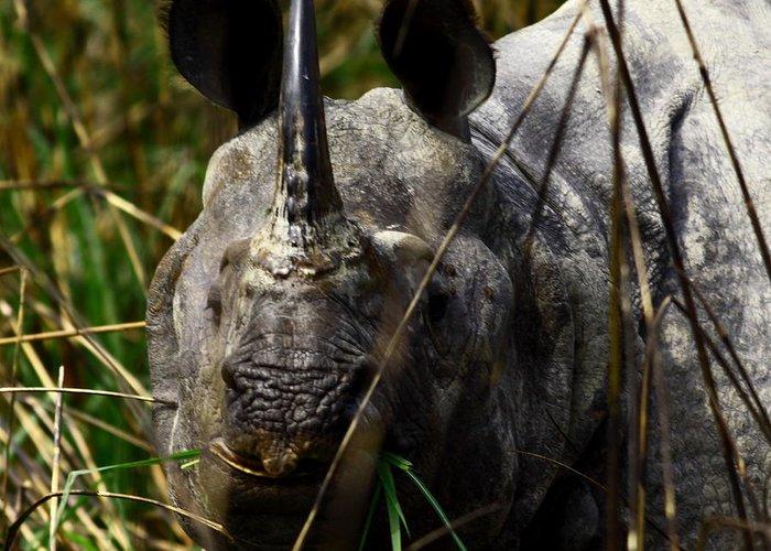 A Black One Horned Rhino At Kaziranga National Park Greeting Card featuring the photograph Rhino by Tues Rahman