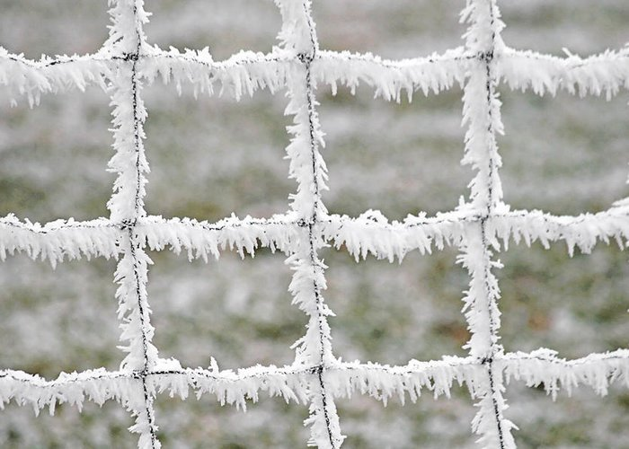 Frost Greeting Card featuring the photograph Rime Covered Fence by Christine Till