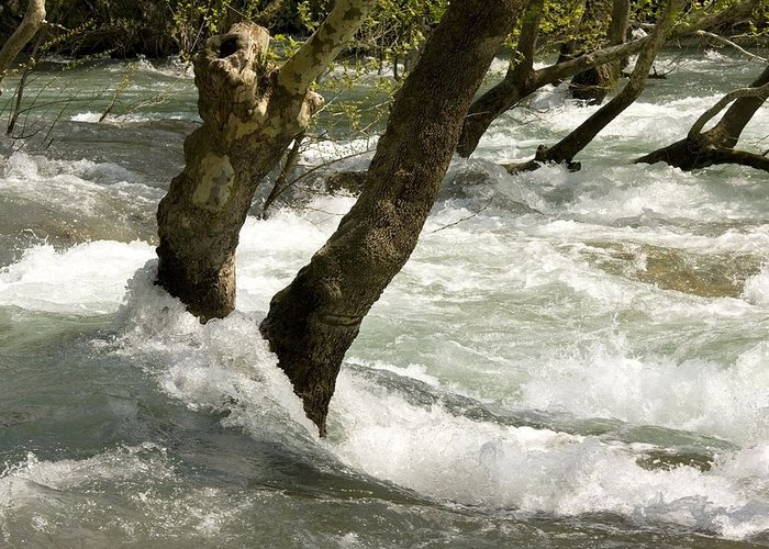 River Manavgat Greeting Card featuring the photograph River Manavgat In Flood by Bob Gibbons
