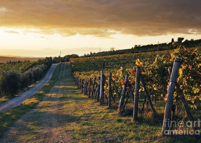 Alcohol Greeting Card featuring the photograph Road Through Vineyard by Jeremy Woodhouse
