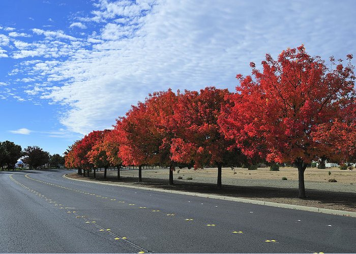Fall Greeting Card featuring the photograph Road To Fall Colors by Richard Leon