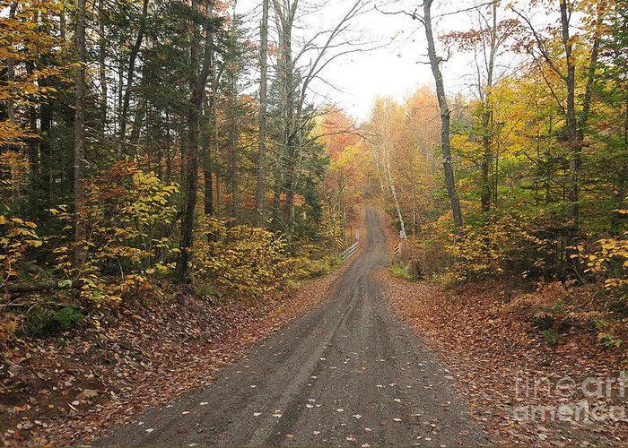 Oldest Untouched Road In America Greeting Card featuring the photograph Roads Less Traveled by Catherine Reusch Daley