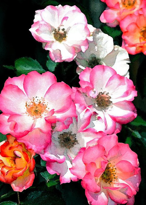 Floral Greeting Card featuring the photograph Rose 133 by Pamela Cooper