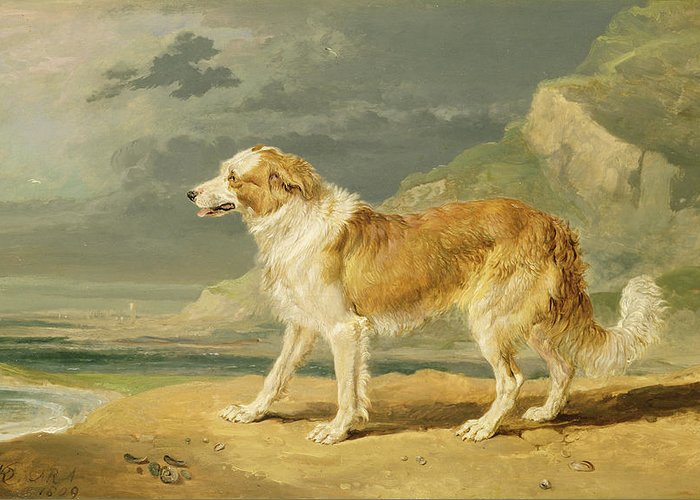 Xyc217381 Greeting Card featuring the photograph Rough-coated Collie by James Ward