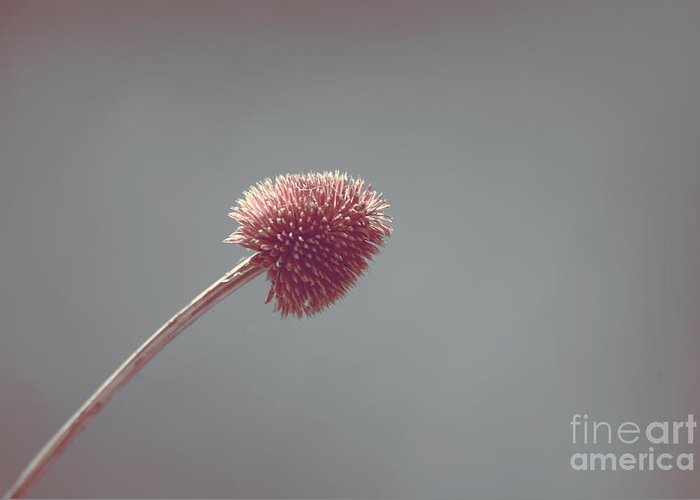 Plant Greeting Card featuring the photograph Sans Nom - S03 by Variance Collections