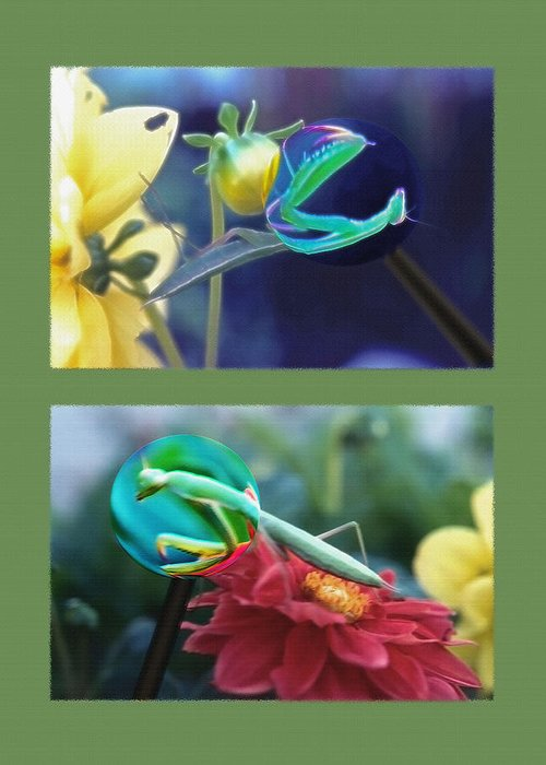 Praying Mantis Greeting Card featuring the photograph Science Class Diptych 2 - Praying Mantis by Steve Ohlsen