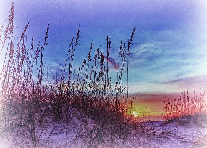 Absence Greeting Card featuring the photograph Sea Oats 5 by Skip Nall