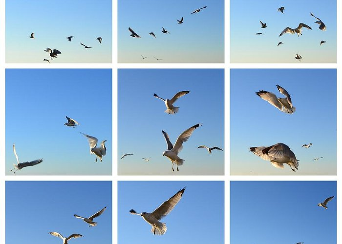 Seagull Greeting Card featuring the photograph Seagull Collage 2 by Michelle Calkins