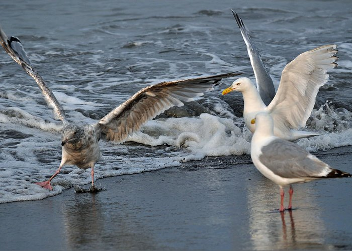 Seagulls Greeting Card featuring the photograph Seagull Treasures by Debra Miller