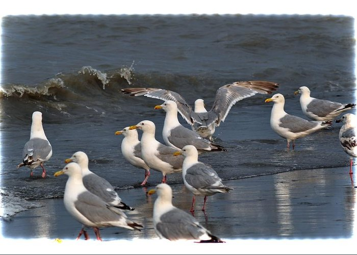 Seagulls Greeting Card featuring the photograph Seagulls Gathering by Debra Miller