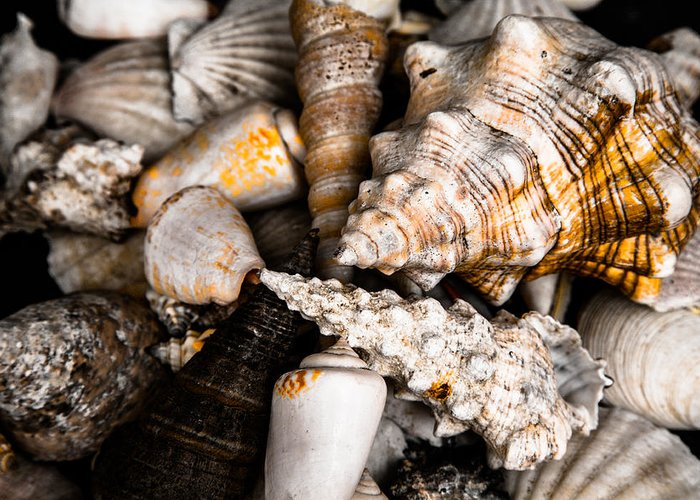 Sea Greeting Card featuring the photograph Seashells by Hakon Soreide