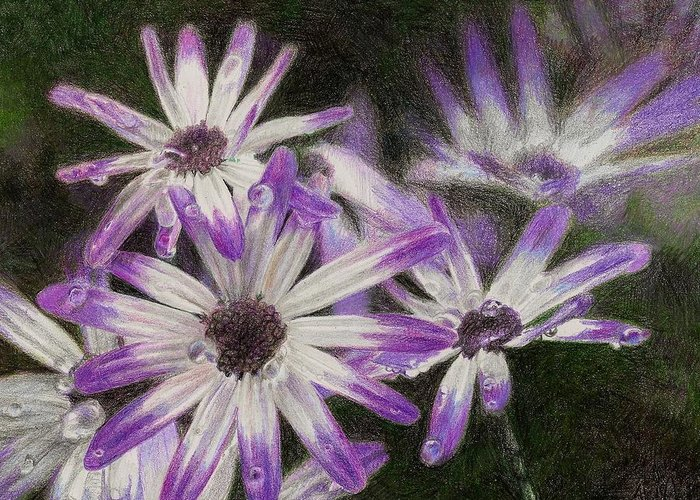 Flowers Greeting Card featuring the drawing Senetti Pericallis by Steve Asbell