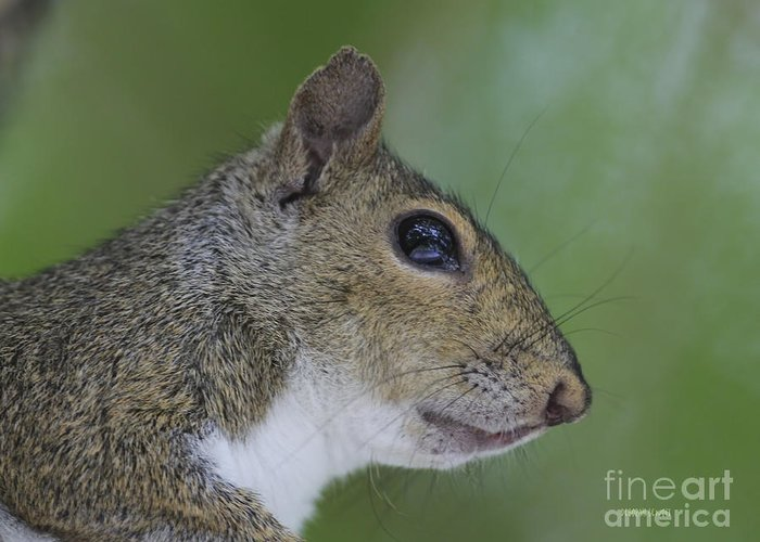 Squirrel Greeting Card featuring the photograph Serious Pondering by Deborah Benoit