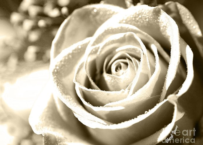 White Rose Greeting Card featuring the photograph Simple by Cheryl Young