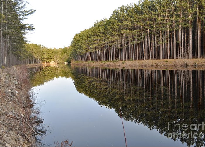 Reflection Greeting Card featuring the photograph Skinny Trees by Luke Moore