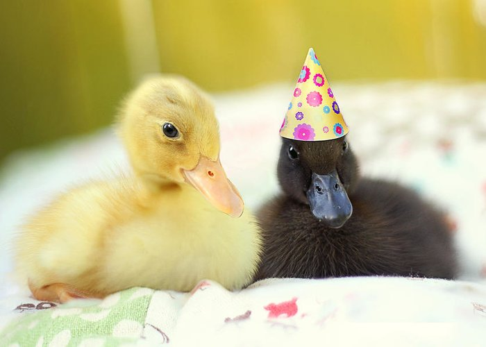 Duckling Photography Greeting Card featuring the photograph Slumber Party by Amy Tyler