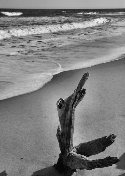 Limb Greeting Card featuring the photograph Snag And Surf by Steven Ainsworth