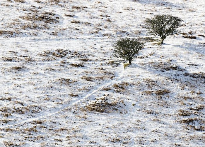 Plant Greeting Card featuring the photograph Snow On Moorland by Adrian Bicker