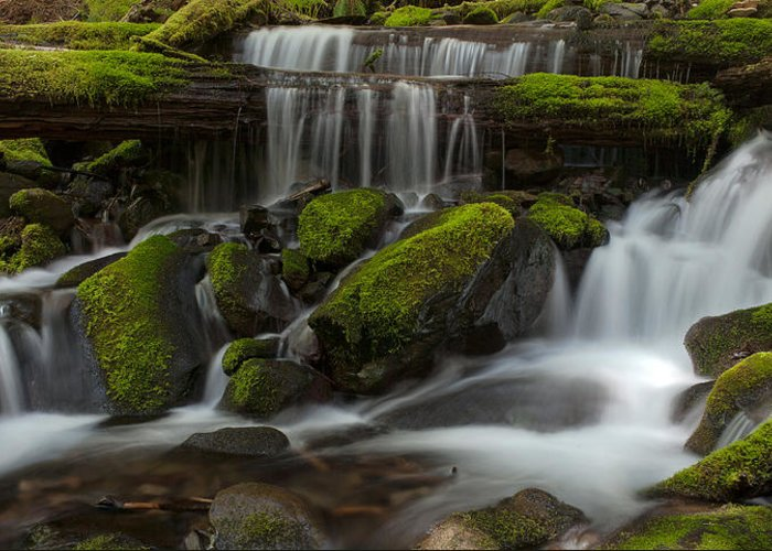 Olympic National Park Greeting Card featuring the photograph Sol Duc Stream by Mike Reid