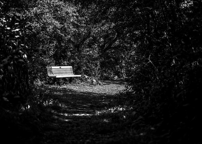 Cj Schmit Greeting Card featuring the photograph Solitude by CJ Schmit