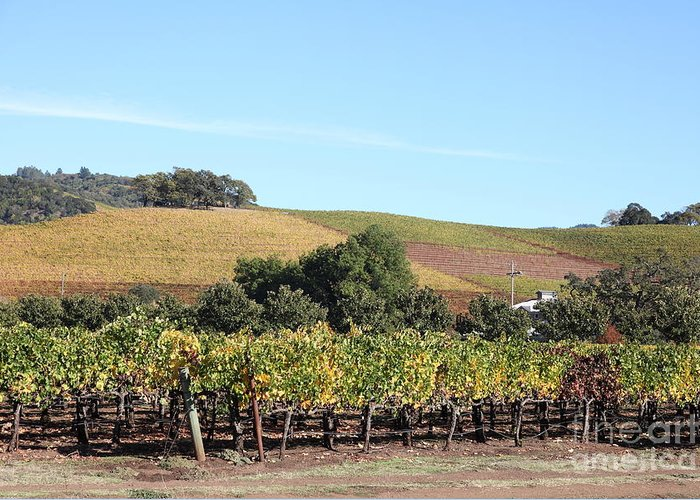 Sonoma Greeting Card featuring the photograph Sonoma Vineyards - Sonoma California - 5d19307 by Wingsdomain Art and Photography