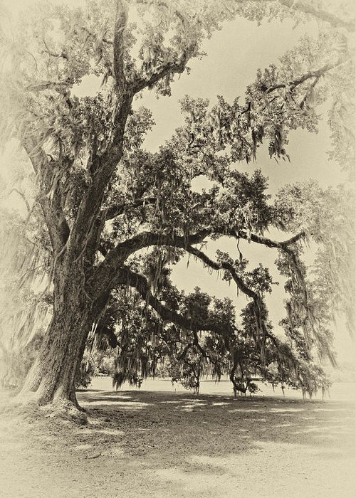Evergreen Plantation Greeting Card featuring the photograph Southern Comfort Sepia by Steve Harrington