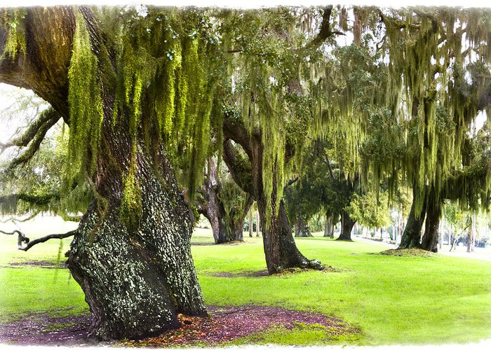 Boats Greeting Card featuring the photograph Spanish Moss At Jekyll Island by Debra and Dave Vanderlaan