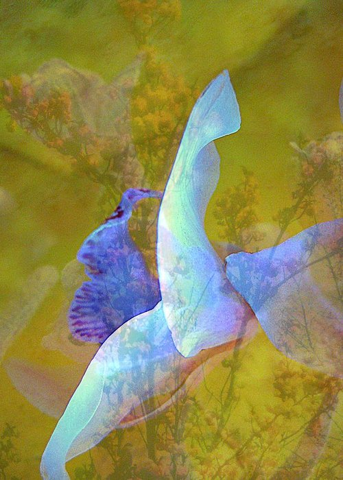 Abstract Greeting Card featuring the photograph Spread To The Wind by Shirley Sirois