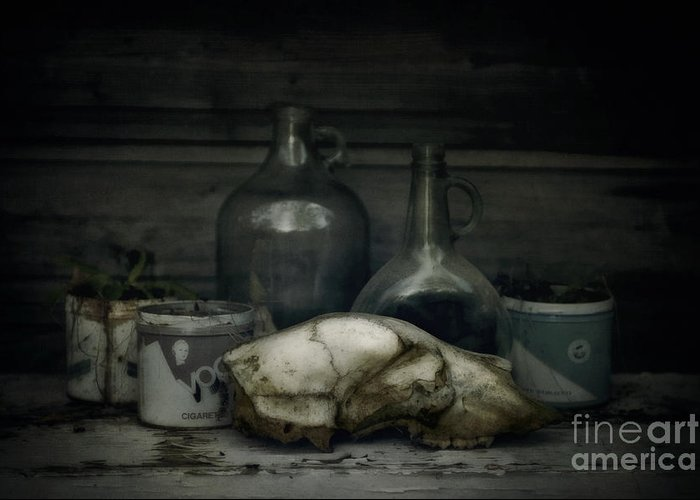 Bear Greeting Card featuring the photograph Still Life With Bear Skull by Priska Wettstein