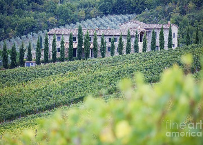 Agriculture Greeting Card featuring the photograph Stone Farmhouse And Vineyard by Jeremy Woodhouse