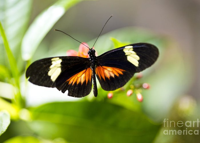 Butterfly Greeting Card featuring the photograph Summer Love by Leslie Leda