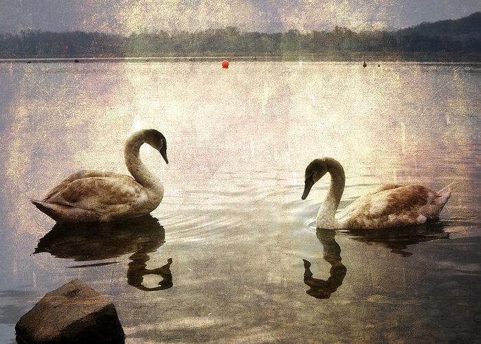 Lago Di Varese Greeting Card featuring the photograph swans on Lake Varese in Italy by Joana Kruse