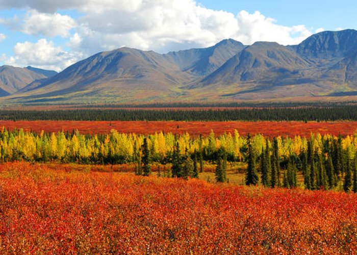 Alaska Greeting Card featuring the photograph Talkeetna Mountains Moment by Alan Lenk