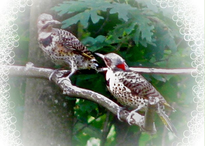 Talking Together Greeting Card featuring the photograph Talking Together by Debra   Vatalaro