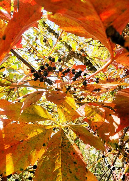 Leaves Greeting Card featuring the photograph The Beauty In Dying by Trish Hale