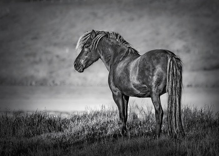 Horse Greeting Card featuring the photograph The Dark Goddess by Evelina Kremsdorf