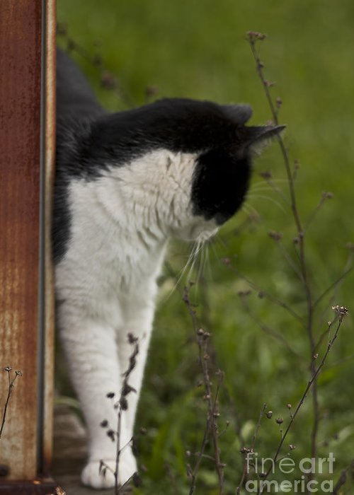 Cats Greeting Card featuring the photograph The Hunt by Kim Henderson