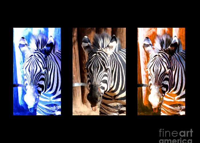 Zebra Greeting Card featuring the photograph The Three Zebras Black Borders by Rebecca Margraf