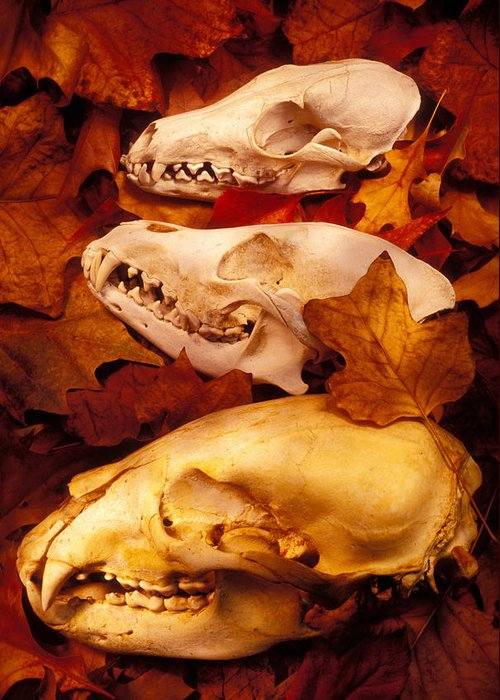 Three Animal Skulls Greeting Card featuring the glass art Three Animal Skulls by Garry Gay