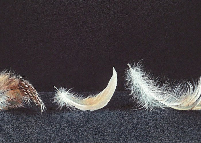Feather Greeting Card featuring the drawing Three Wishes by Elena Kolotusha