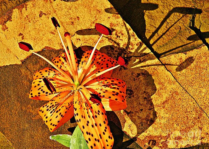 Lily Greeting Card featuring the photograph Tiger Lily Still Life by Chris Berry